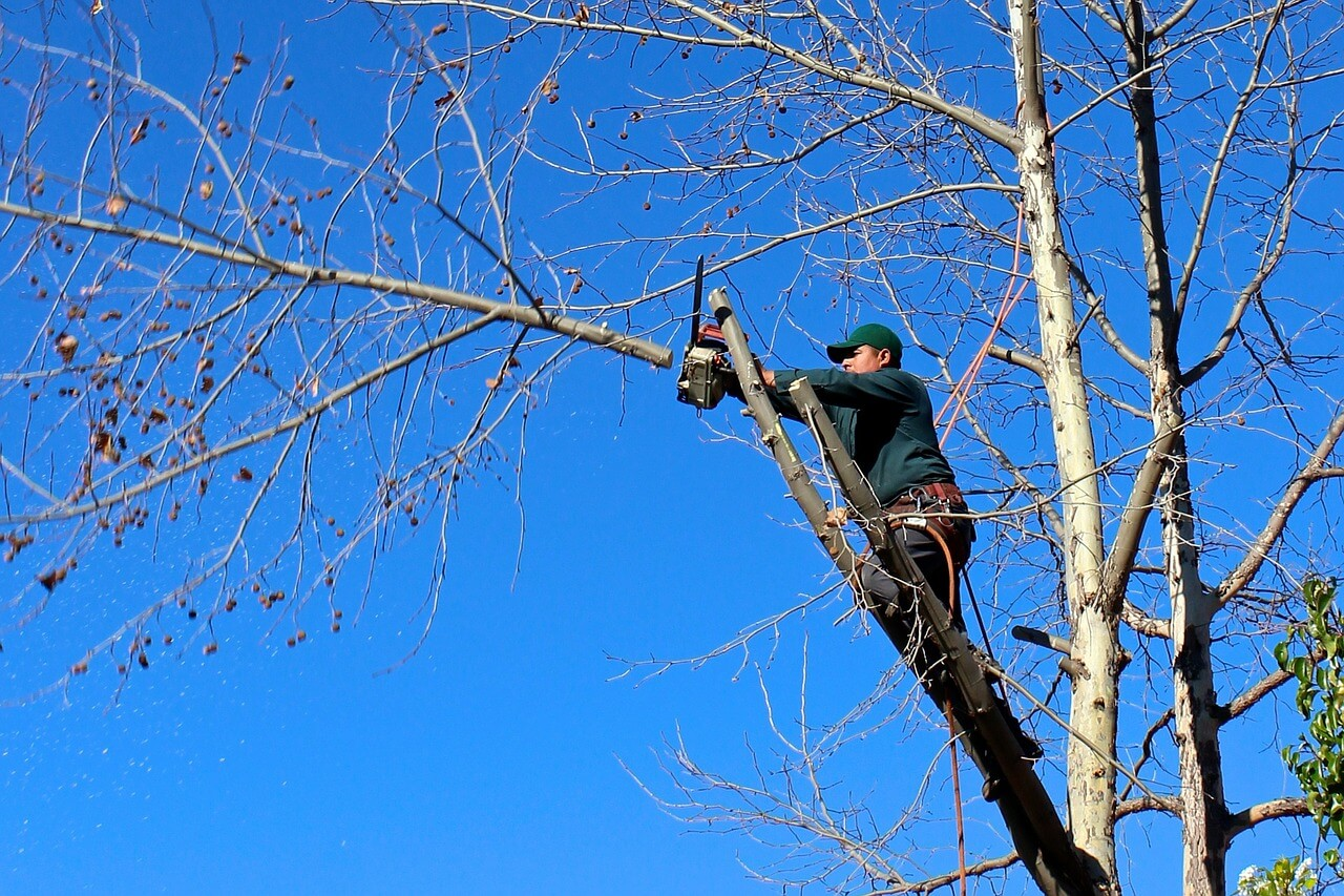 Contact Us-Carlsbad CA Tree Trimming and Stump Grinding Services-We Offer Tree Trimming Services, Tree Removal, Tree Pruning, Tree Cutting, Residential and Commercial Tree Trimming Services, Storm Damage, Emergency Tree Removal, Land Clearing, Tree Companies, Tree Care Service, Stump Grinding, and we're the Best Tree Trimming Company Near You Guaranteed!