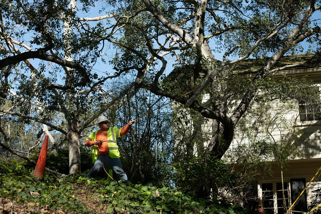 Del Dios-Carlsbad CA Tree Trimming and Stump Grinding Services-We Offer Tree Trimming Services, Tree Removal, Tree Pruning, Tree Cutting, Residential and Commercial Tree Trimming Services, Storm Damage, Emergency Tree Removal, Land Clearing, Tree Companies, Tree Care Service, Stump Grinding, and we're the Best Tree Trimming Company Near You Guaranteed!