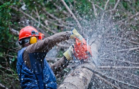 Oceanside-Carlsbad CA Tree Trimming and Stump Grinding Services-We Offer Tree Trimming Services, Tree Removal, Tree Pruning, Tree Cutting, Residential and Commercial Tree Trimming Services, Storm Damage, Emergency Tree Removal, Land Clearing, Tree Companies, Tree Care Service, Stump Grinding, and we're the Best Tree Trimming Company Near You Guaranteed!