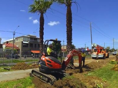 Palm Tree Removal-Carlsbad CA Tree Trimming and Stump Grinding Services-We Offer Tree Trimming Services, Tree Removal, Tree Pruning, Tree Cutting, Residential and Commercial Tree Trimming Services, Storm Damage, Emergency Tree Removal, Land Clearing, Tree Companies, Tree Care Service, Stump Grinding, and we're the Best Tree Trimming Company Near You Guaranteed!