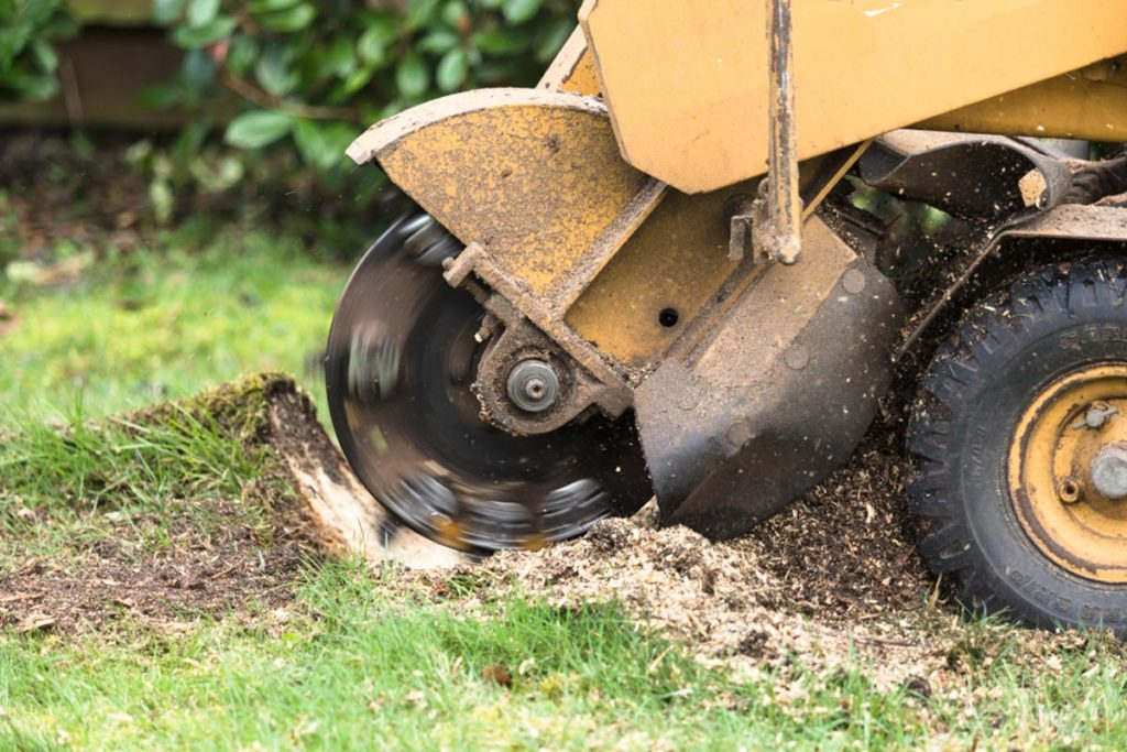 Stump Grinding-Carlsbad CA Tree Trimming and Stump Grinding Services-We Offer Tree Trimming Services, Tree Removal, Tree Pruning, Tree Cutting, Residential and Commercial Tree Trimming Services, Storm Damage, Emergency Tree Removal, Land Clearing, Tree Companies, Tree Care Service, Stump Grinding, and we're the Best Tree Trimming Company Near You Guaranteed!