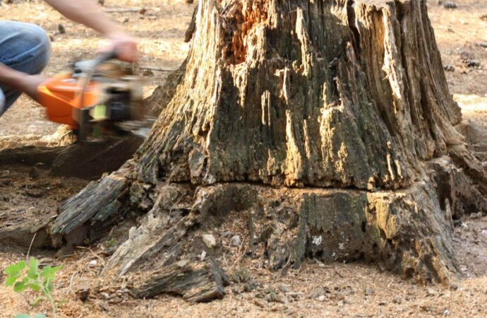 Stump Removal-Carlsbad CA Tree Trimming and Stump Grinding Services-We Offer Tree Trimming Services, Tree Removal, Tree Pruning, Tree Cutting, Residential and Commercial Tree Trimming Services, Storm Damage, Emergency Tree Removal, Land Clearing, Tree Companies, Tree Care Service, Stump Grinding, and we're the Best Tree Trimming Company Near You Guaranteed!