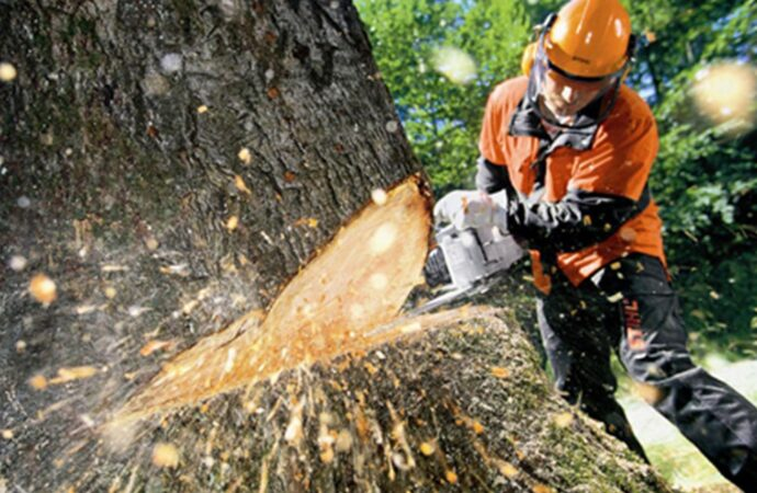 Tree Cutting-Carlsbad CA Tree Trimming and Stump Grinding Services-We Offer Tree Trimming Services, Tree Removal, Tree Pruning, Tree Cutting, Residential and Commercial Tree Trimming Services, Storm Damage, Emergency Tree Removal, Land Clearing, Tree Companies, Tree Care Service, Stump Grinding, and we're the Best Tree Trimming Company Near You Guaranteed!