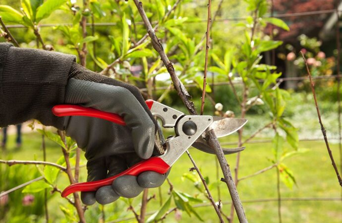 Tree Pruning-Carlsbad CA Tree Trimming and Stump Grinding Services-We Offer Tree Trimming Services, Tree Removal, Tree Pruning, Tree Cutting, Residential and Commercial Tree Trimming Services, Storm Damage, Emergency Tree Removal, Land Clearing, Tree Companies, Tree Care Service, Stump Grinding, and we're the Best Tree Trimming Company Near You Guaranteed!