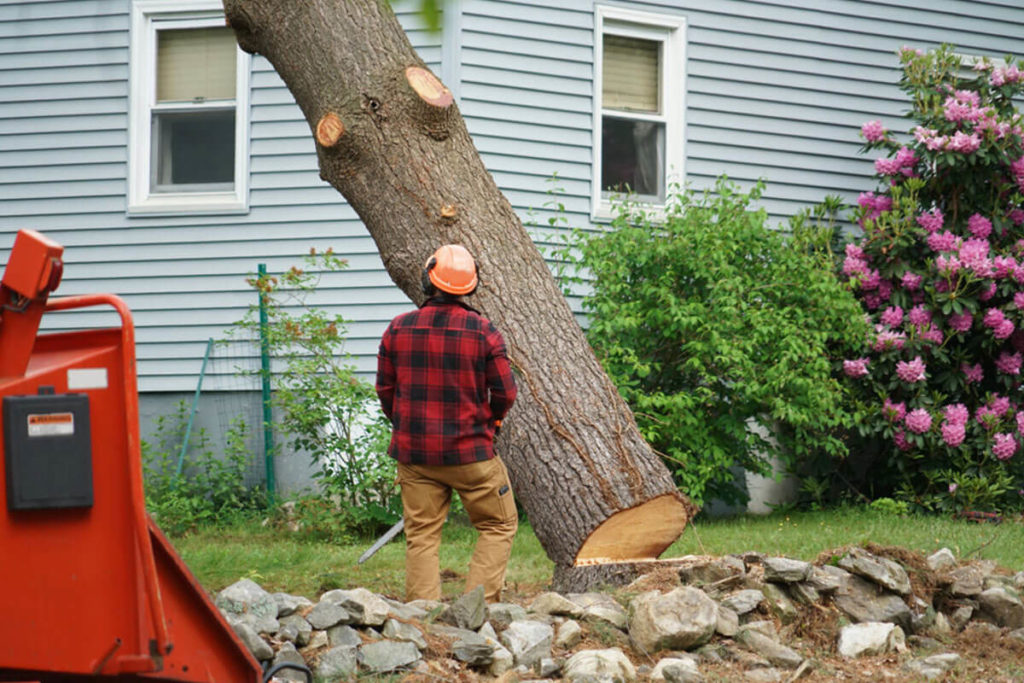 Tree Removal-Carlsbad CA Tree Trimming and Stump Grinding Services-We Offer Tree Trimming Services, Tree Removal, Tree Pruning, Tree Cutting, Residential and Commercial Tree Trimming Services, Storm Damage, Emergency Tree Removal, Land Clearing, Tree Companies, Tree Care Service, Stump Grinding, and we're the Best Tree Trimming Company Near You Guaranteed!